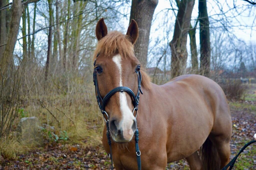 rosetter i hästens svans